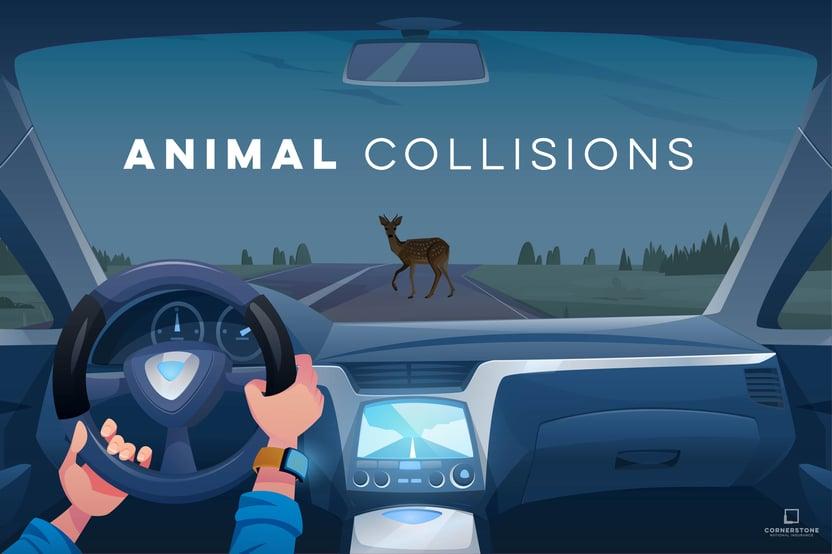 3. 50301B_Animal Collisions_Blog-01